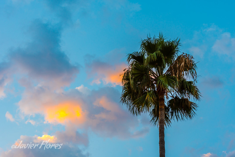 Palm with clouds