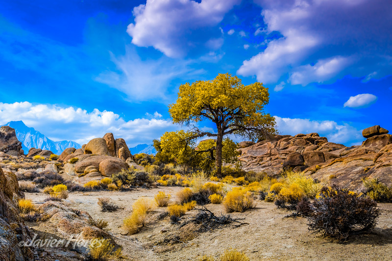 Fall at Alabama Hills