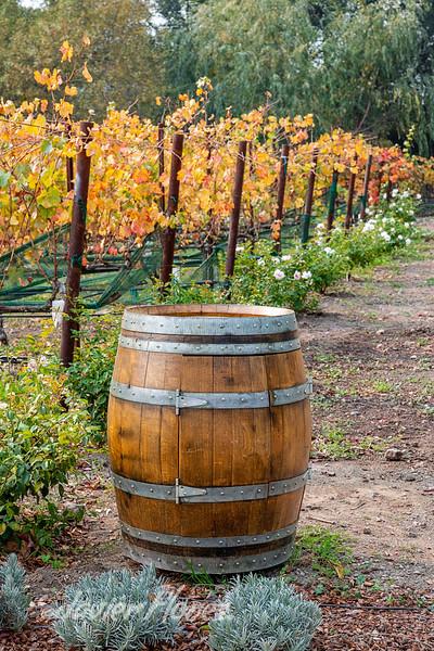 Barrel in Vineyards