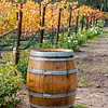 Barrel in Vineyards