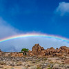 Lone cottonwood tree with rainbow at The Alabama Hills
