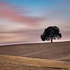 Yolo County Lone Tree