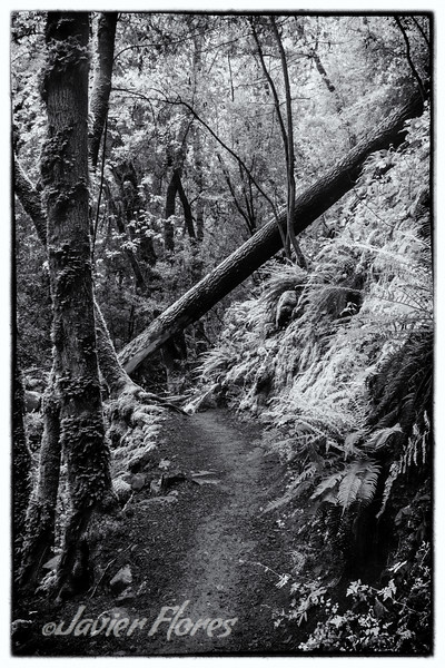 Uvas trail with fallen tree