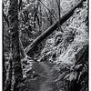 Uvas trail with fallen tree