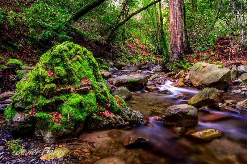 Moss-covered Rocks along Stream