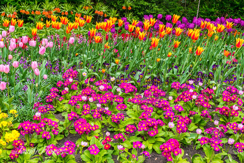 Spring Flowers at St. James Park