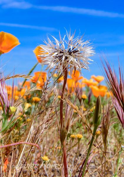 Spring Wildflower Bloom