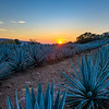 Blue Agave Fields, Jalisco