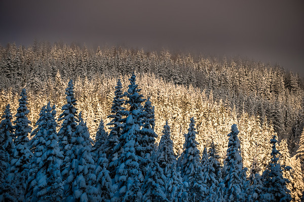 Evening light on snowy trees with mountains, Whitewater ski area, Canada