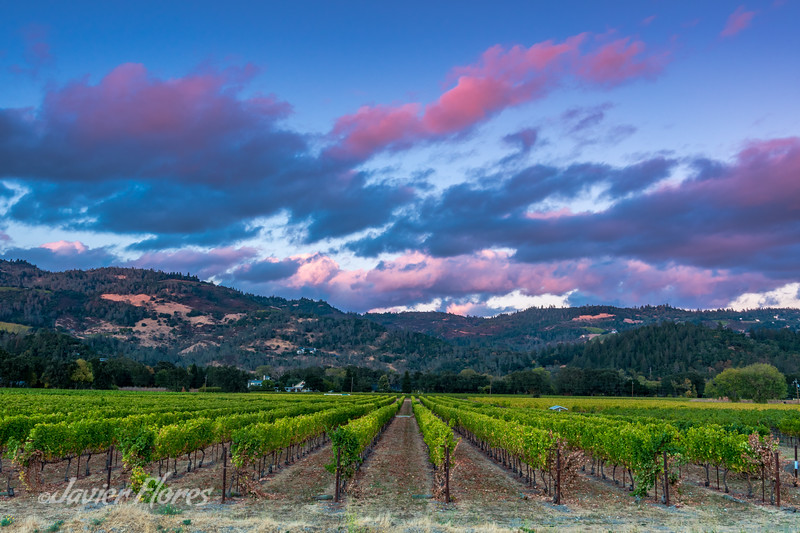 Napa Valley at Sunset