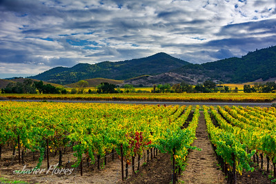 Napa Valley Vineyards and Mountains