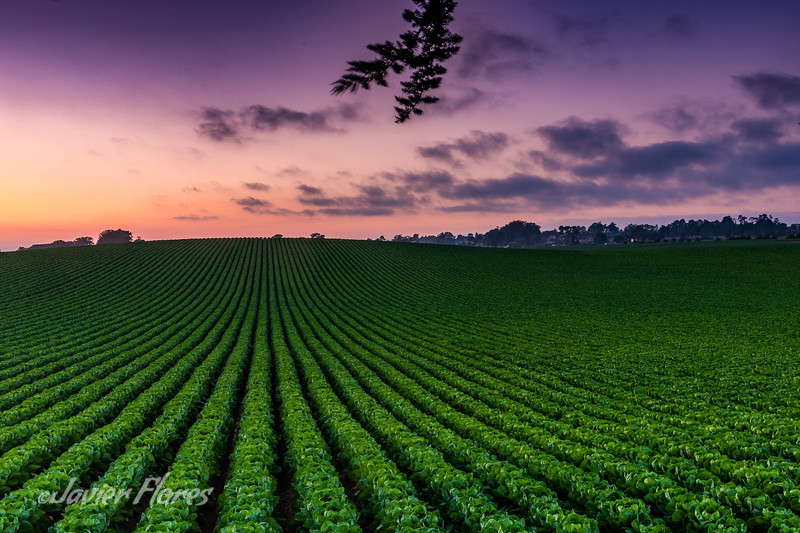 Watsonville farm fields at Sunset