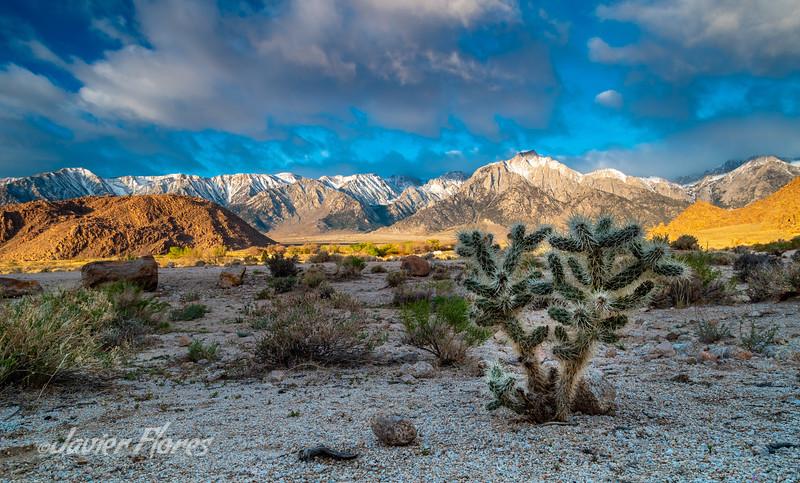 Desert Cactus at Alabama Hills