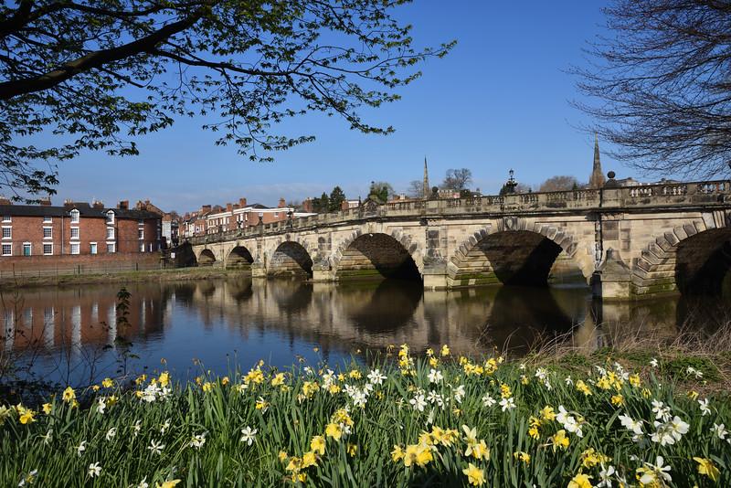 Spring daffodils at the English Bridge, Shrewsbury.