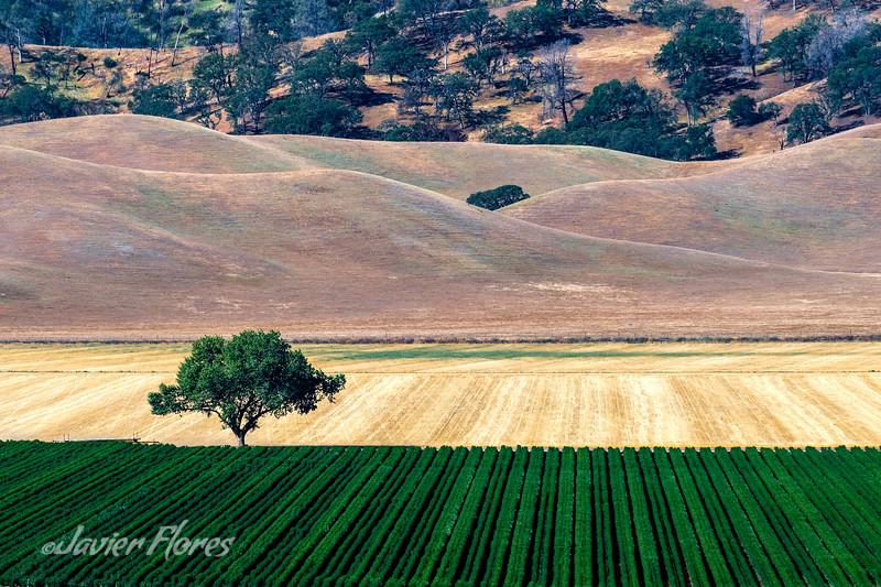 Yolo County fields