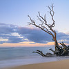 Tree in the Surf