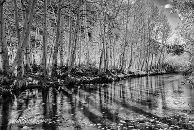 Bishop Creek in Black and white
