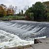 Salmon leaping at the Weir, Shrewsbury.