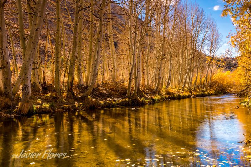 Aspen at Bishop Creek