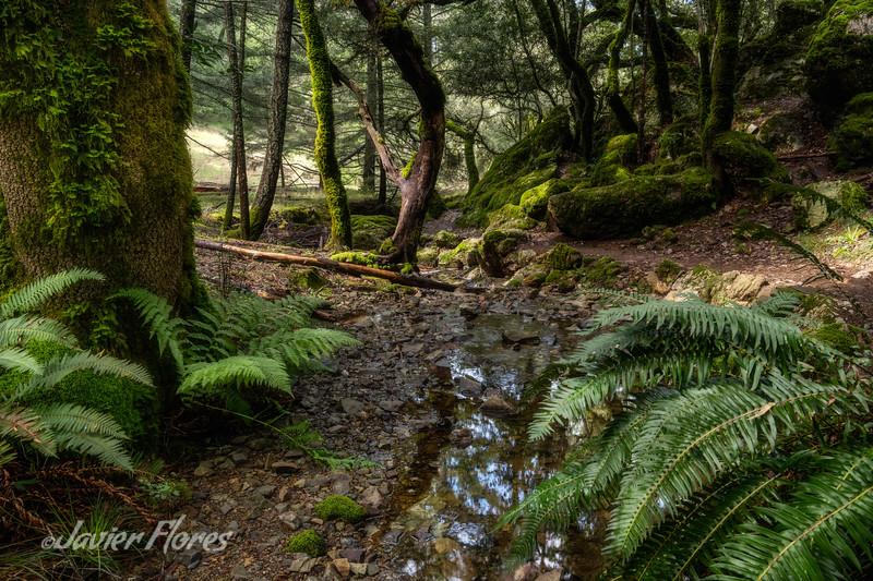 Lush Northern California Creek
