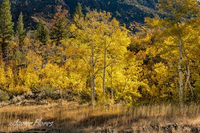 Fall at Bishop Creek