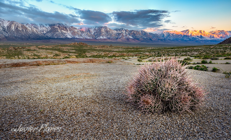 Sunrise with barrel cactus at Alabama Hills