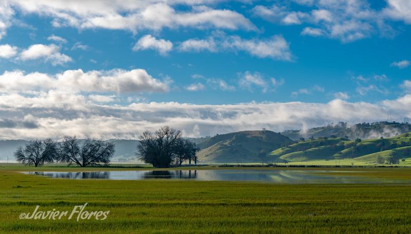 Coyote Valley Grassland