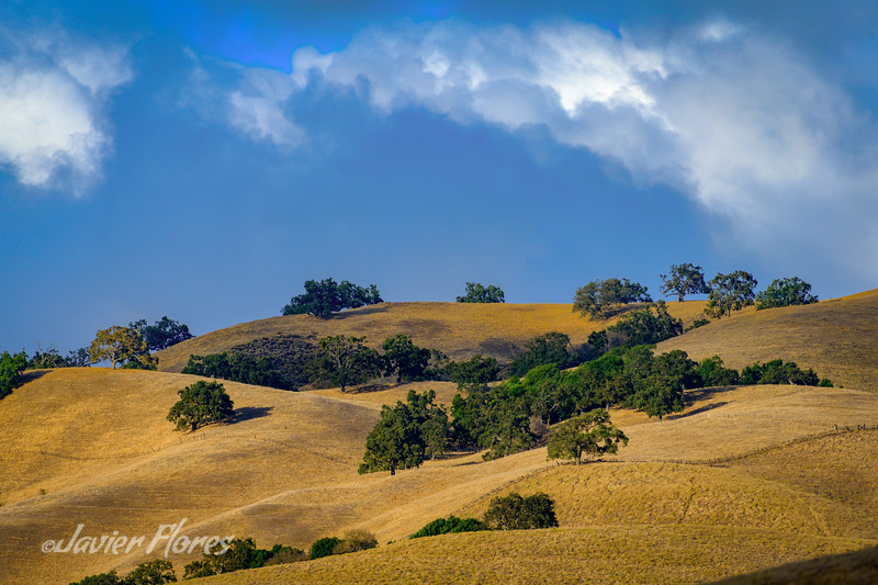 Rolling Golden California Hills