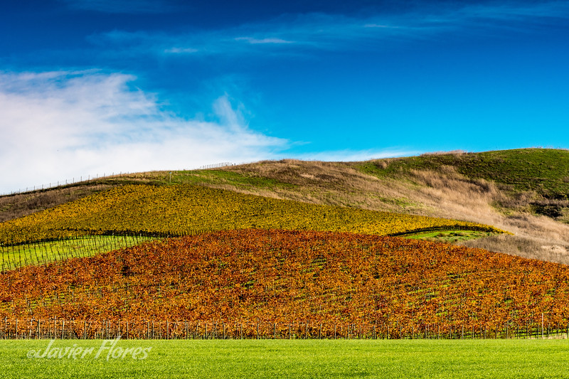 Hillside Vineyards in the fall