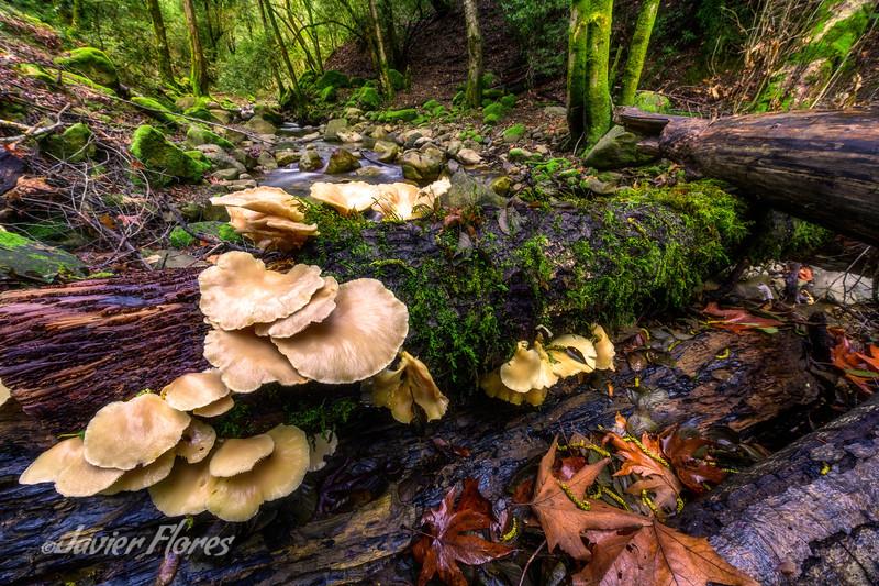 Wild Mushrooms and Creek