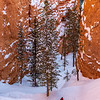 Bryce Canyon Switch Backs