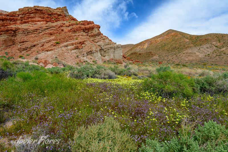Red Rocks with Spring Bloom