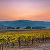 Napa Valley Sunset