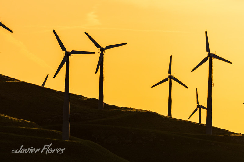 Rolling hills of Altamont pass wind farm at sunrise