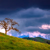 Lone Oak tree with storm clouds