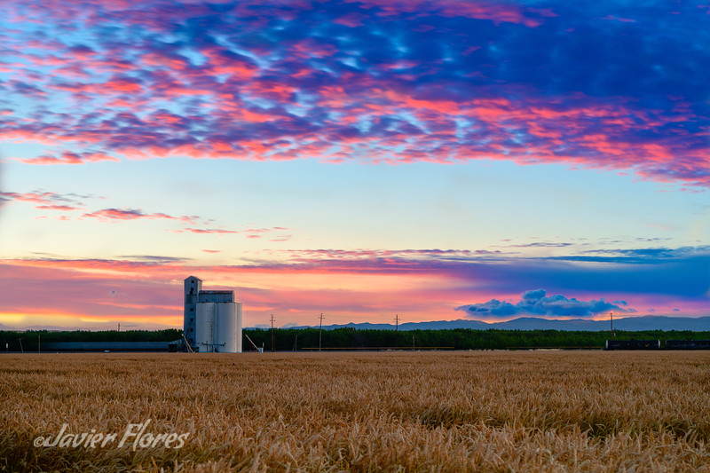 Silo with Wheat Fields at Sunset