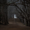 Dark Forest Path