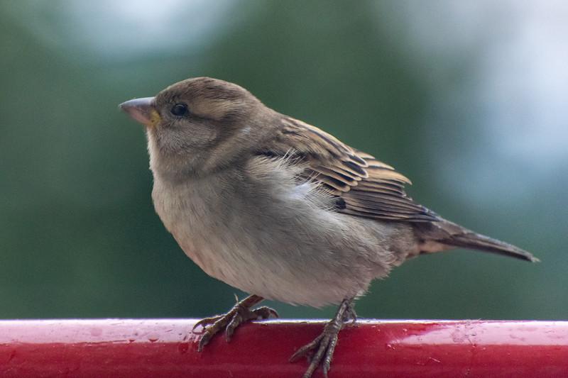 Bird on my balcony