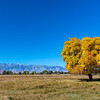 Bishop California Fall