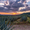 Sunset over blue agave fields near Atotonilco El Alto, Jalisco, Mexico