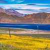 Wildflower on the shore of Lake Isabella