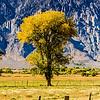 Yellow tree in field