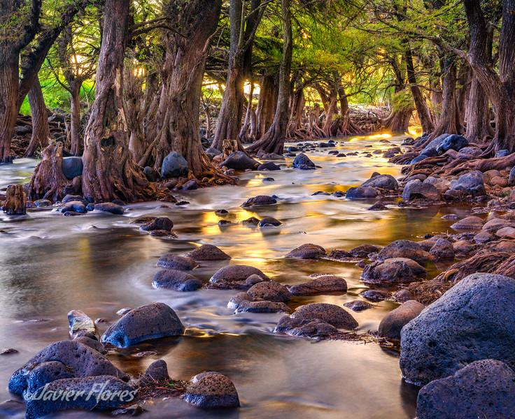 Los Sabinos River Glowing with Golden Ligh