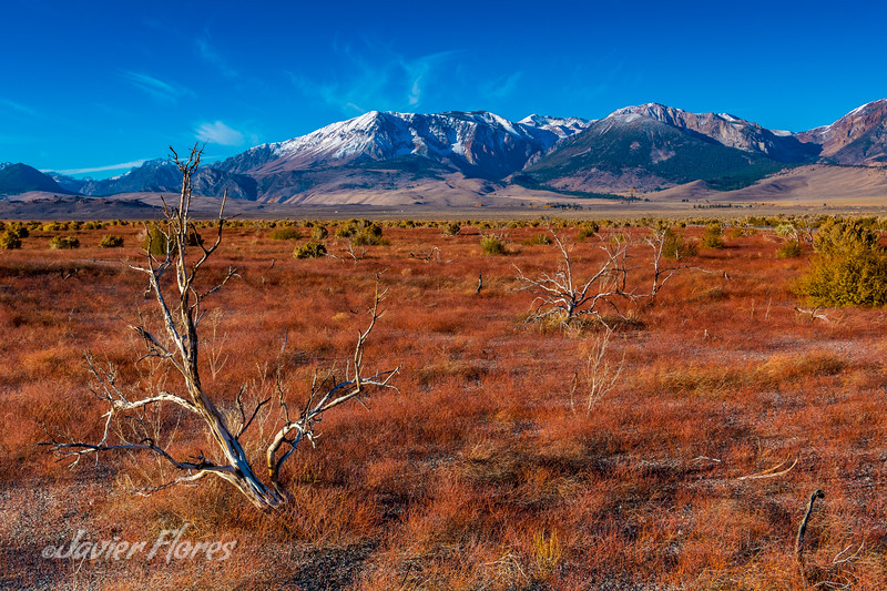 Read Fields Eastern Sierra
