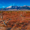 Read Fields Eastern Sierra