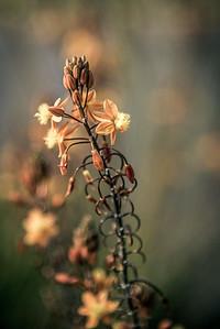 A Climbing Flower