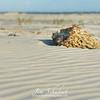 Sponge In The Sand 1