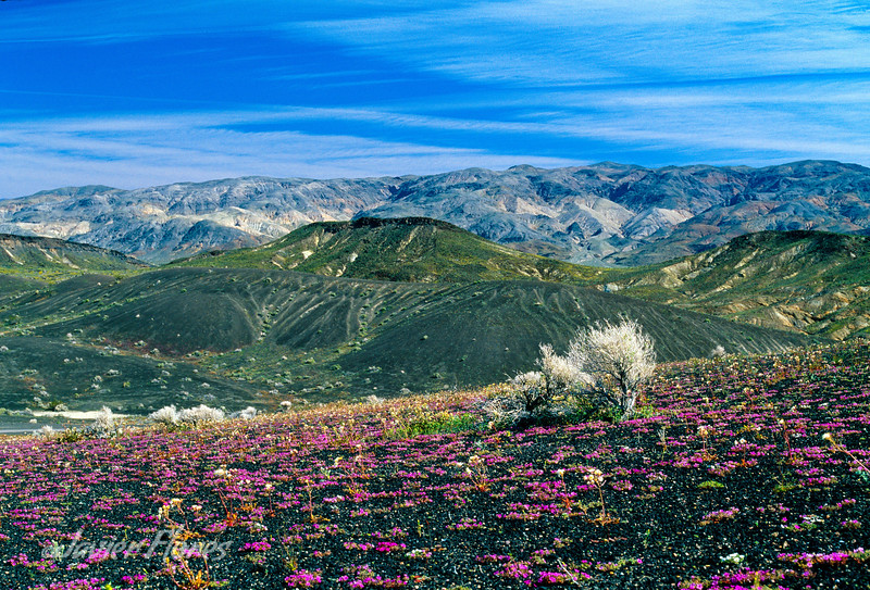 Ubehebe Crater in the Spring Bloom