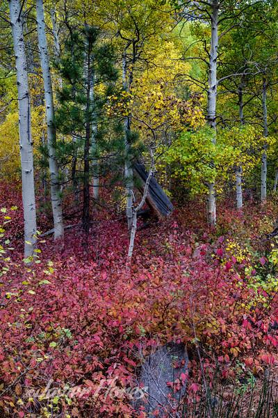 Lee Vining Canyon Fall Colors