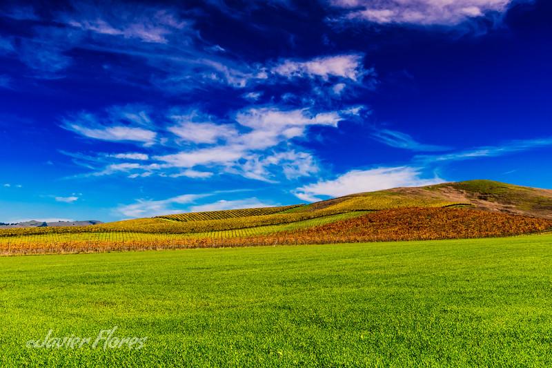 Fall Napa Valley Vineyards